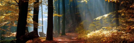Octombrie 2016: Conștiinciozitate